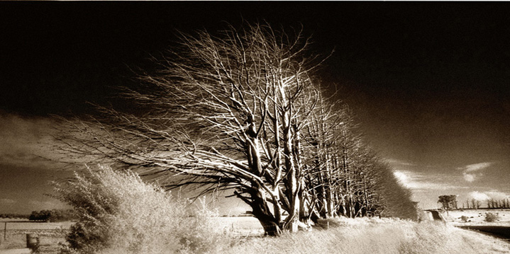 Image of John Wilkins for Infra red landscape